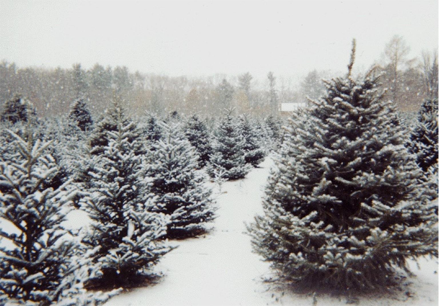 Navidad y ecología