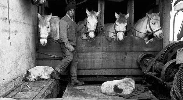 Homenaje perros ponis Amundsen Scott