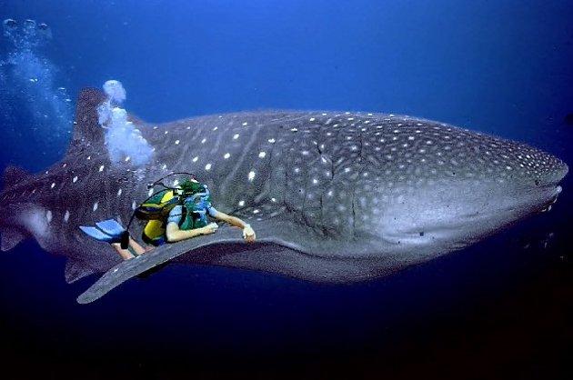 Cómo cargarse reserva marina mejor conservada mundo