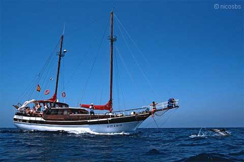 Busca cetáceos costa Mazarrón