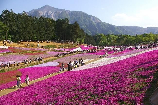 Musgo Rosa_Hitsujiyama Park
