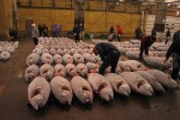 800px-Tsukiji_Fish_market_and_Tuna1