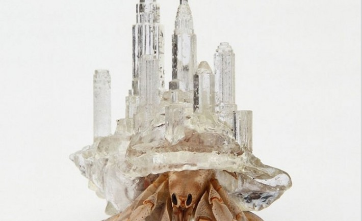 Conchas arquitectónicas cangrejos ermitaños