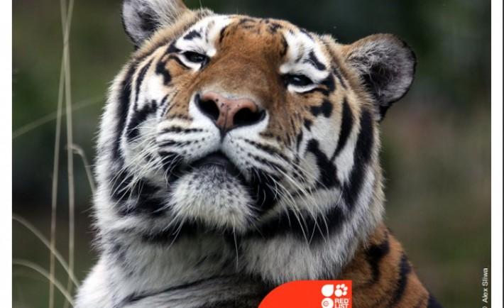 Cooperación internacional identificar áreas protegidas mayor peligro extinción2