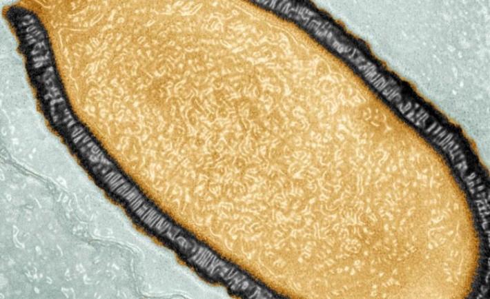 Reviven virus gigante estuvo congelado 30000 anos2