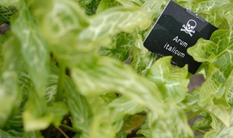 Alnwick jardin cien venenos