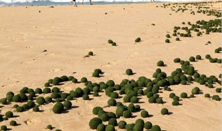 Misteriosas bolas verdes aparecidas playa australiana