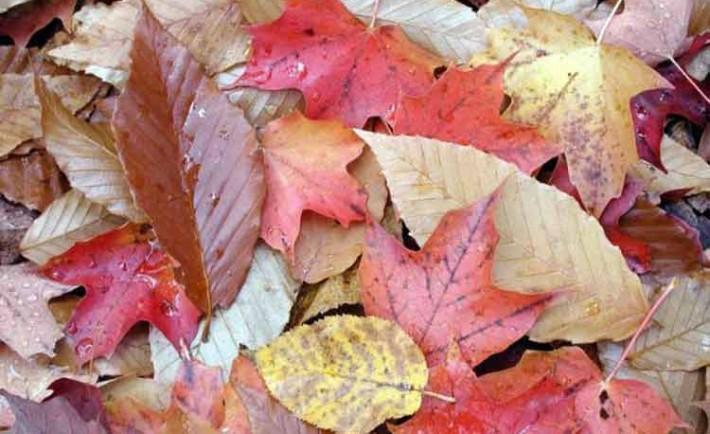 LaBrujulaVerde-hojascambiandecolorenotono