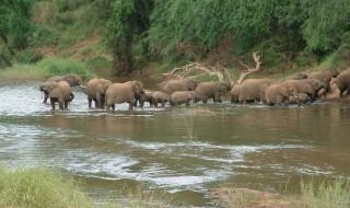 Elefantes metereologos mundo animal