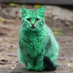 Misterio gato verde