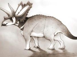 Descubren dos nuevas especies de dinosaurio en un museo de Canadá