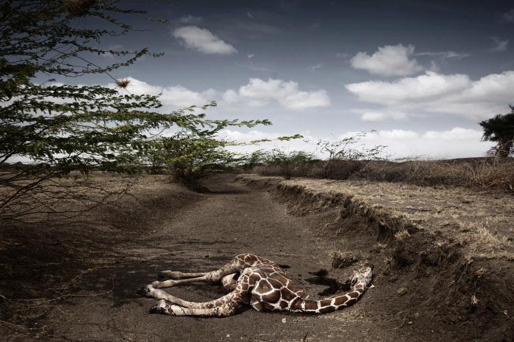 Las impactantes fotos del Syngenta Photography Award