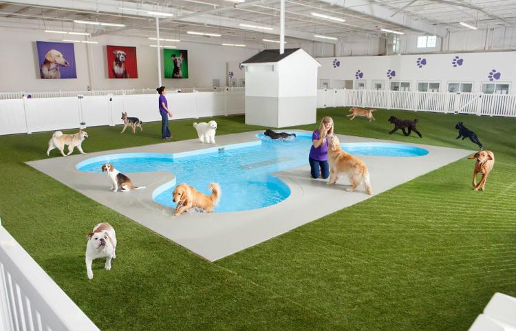 El aeropuerto JFK de Nueva York abrirá una terminal exclusiva para mascotas
