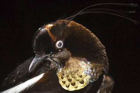 Las nuevas especies descubiertas en Indonesia