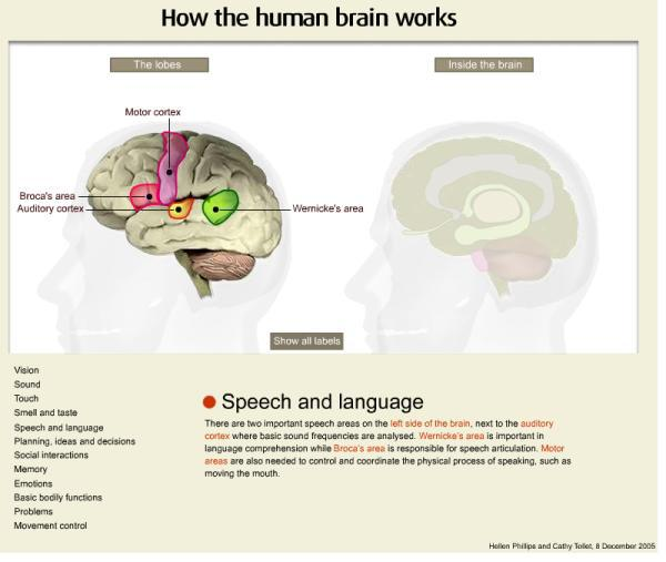 how a human brain works in The brain is very good at deciding which things it needs to pay  knowing how  the human brain works is one of the best ways to do that.