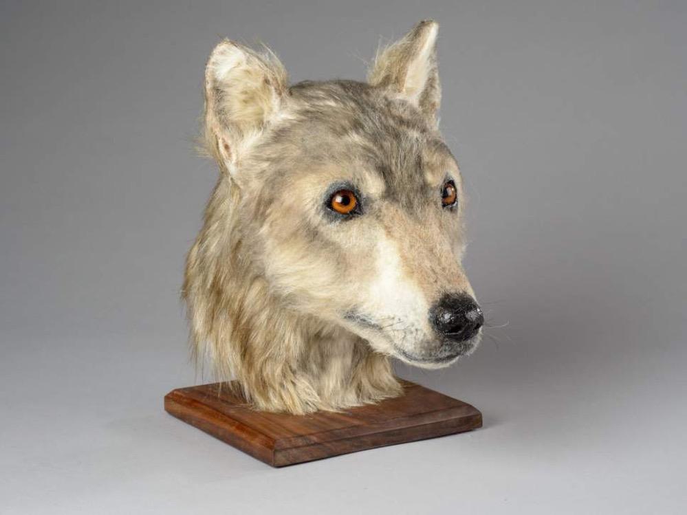 Reconstruyen el rostro de un perro de hace 4500 años a partir de restos encontrados en una tumba neolítica en Escocia
