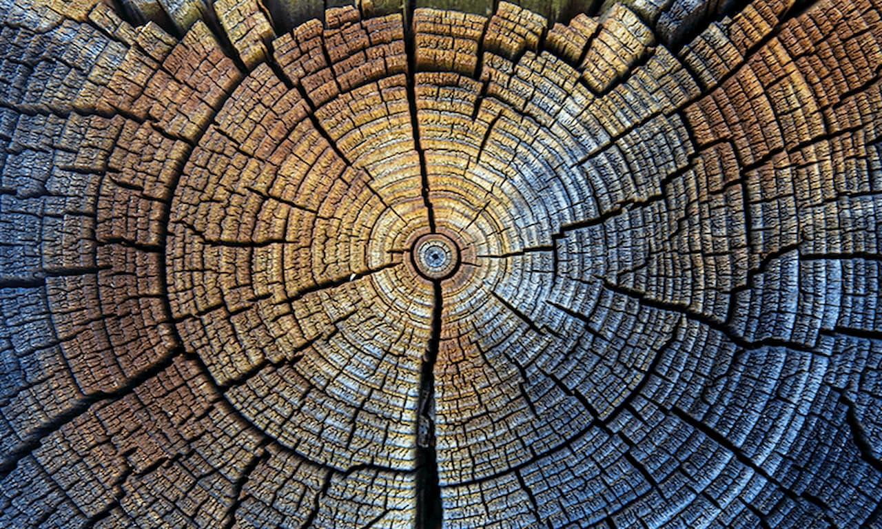 Treerings7852